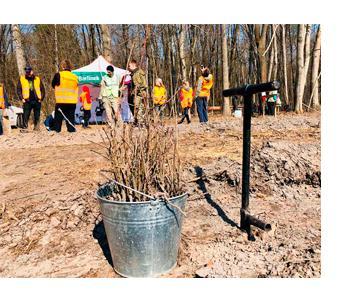 паркетная доска Киев купить высадка деревьев Barlinek